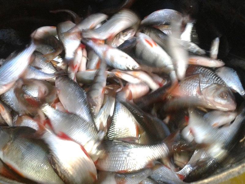 longpond-fishing-ddaa